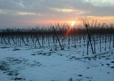 Winter am Wagram
