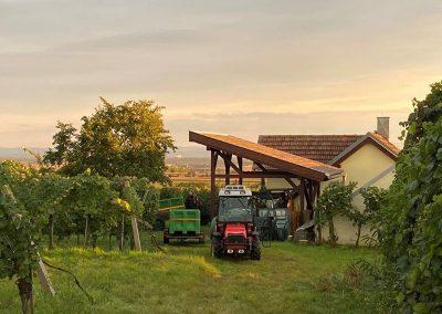 Abendstimmung bei der Ernte